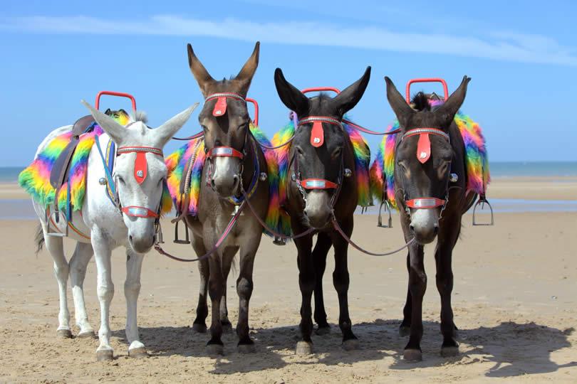 Blackpool donkeys on the beach