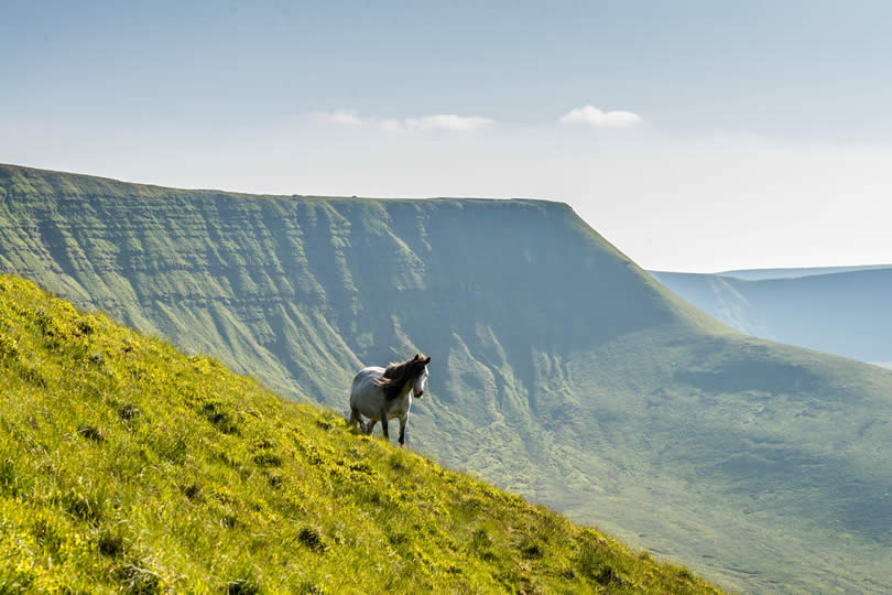 horse at the Brecon Beacons in Wales