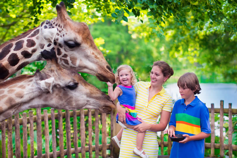 Family and giraffe in zoo