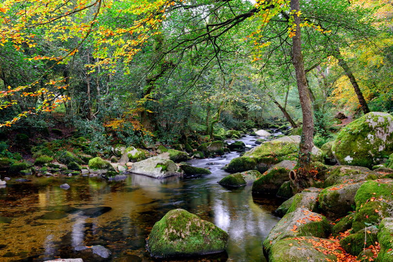 Dartmoor National Park forest stream