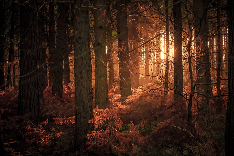 Cannock Chase forest in Autumn