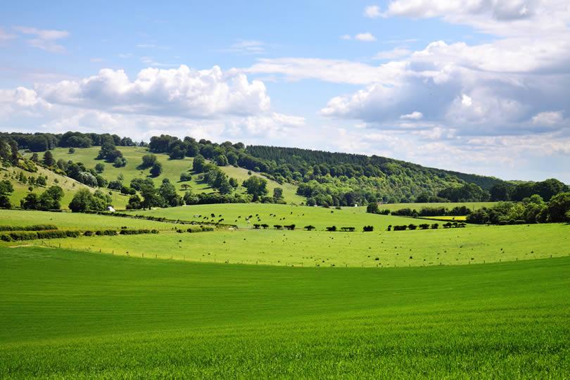 Chiltern Hills Landscape
