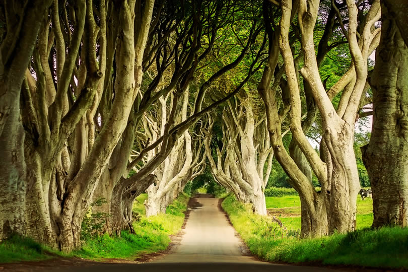 Dark Hedges in Armoy Northern Ireland