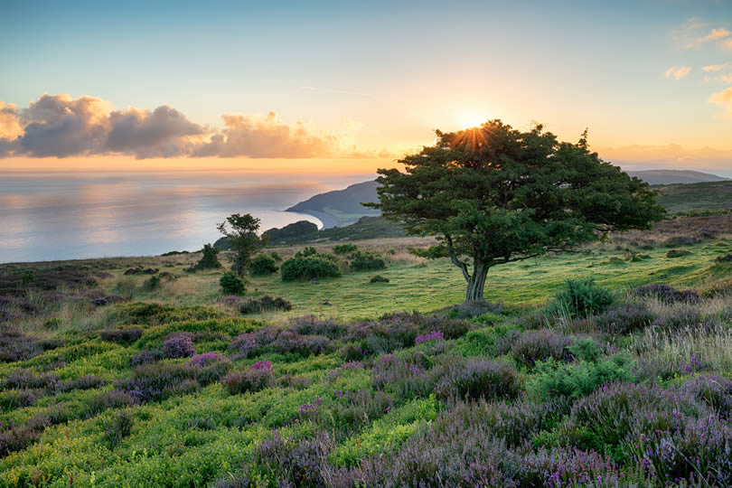 Porlock common on the Exmoor National Park coast