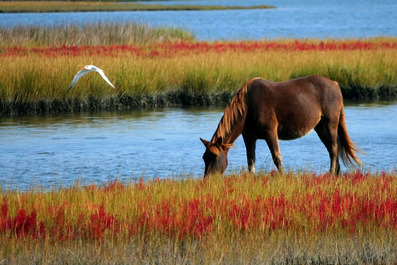 Avalon Marshes horse and bird