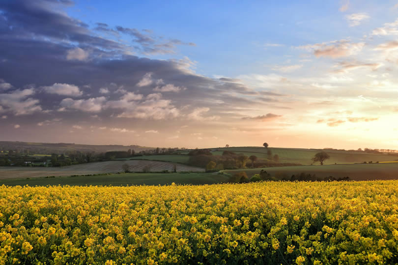 Lincolnshire Wolds landscape with yellow oilseed rape