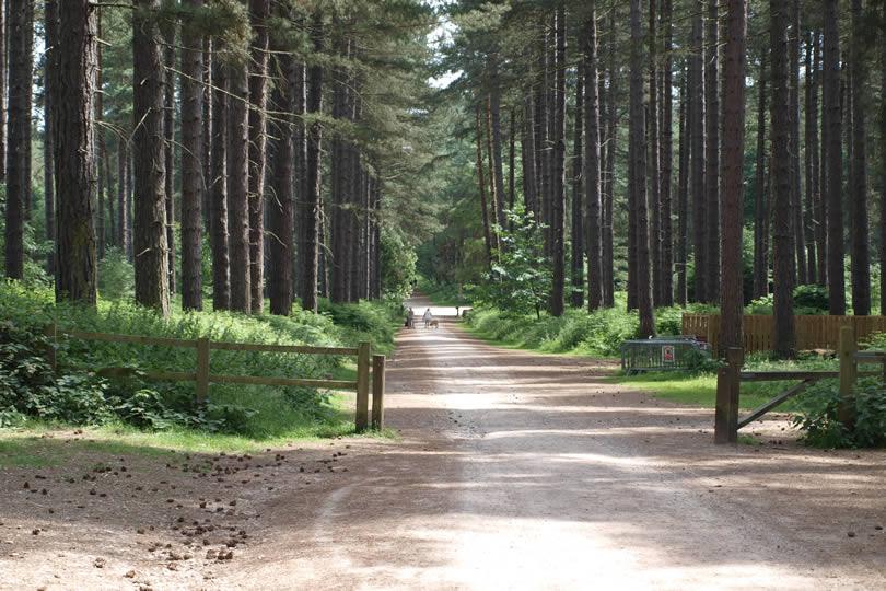 Sherwood Forest entrance gate