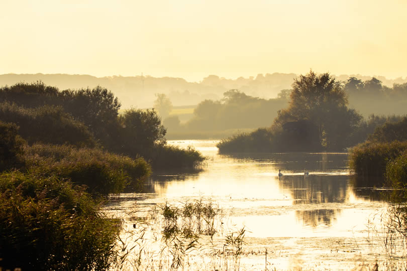 Shapwick Heath National Nature Reserve in Somerset England
